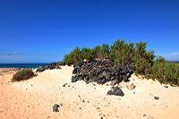 Fuerteventura 150 km Strandlandschaft Naturpark Corralejo das grösste Dünengebiet der Kanaren