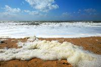 Ile D Oleron Insel des Lichts, endlose Sandstrände, Wellen und Fischerhäuschen mit Stockrosen laden zum Verweilen ein.