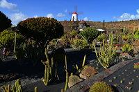 Lanzarote Guatiza Jardín de Cactus Kaktusgarten César Manrique