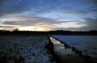 Mönchbruch Naturschutzgebiet